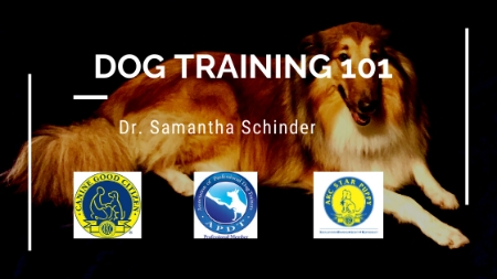 Dog Training 101 Theory and Obedience