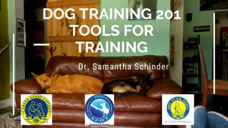 Dog Training 201  Tools for Training